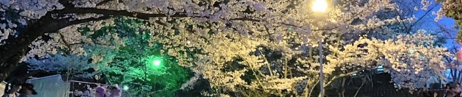 三重県津市 偕楽公園 お花見シーズン 夜桜 建築家 アポア ライトアップ
