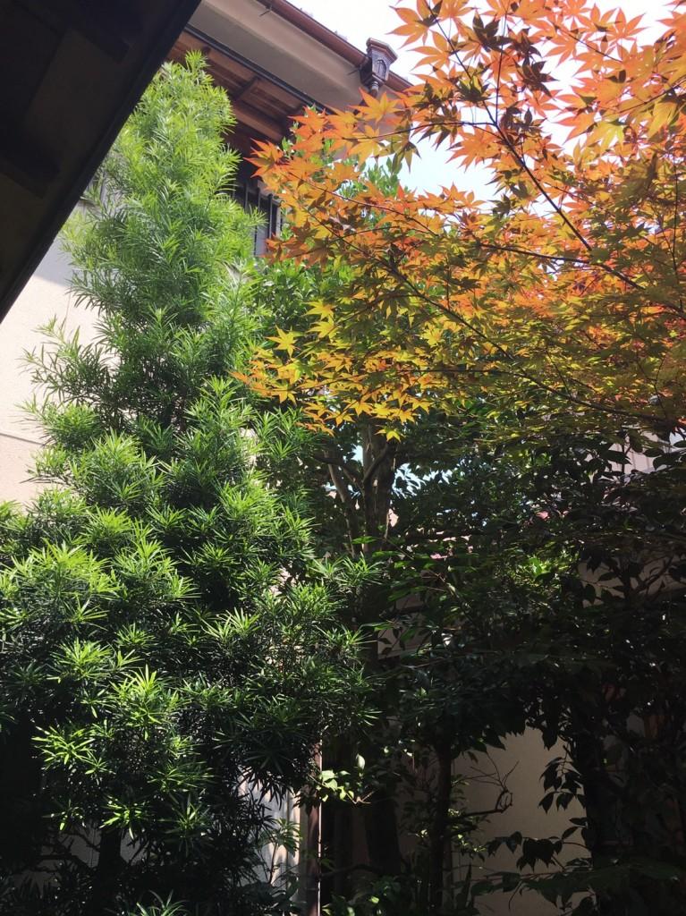 三重県津市 庭木の剪定 庭木の手入れ APOAの職人 リフォーム相談
