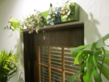 玄関もピコガーデンで緑がいっぱいの店内